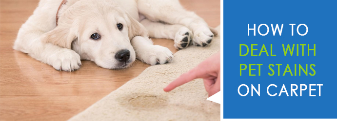 5 Ways to Deal with Pet Stains on Carpet