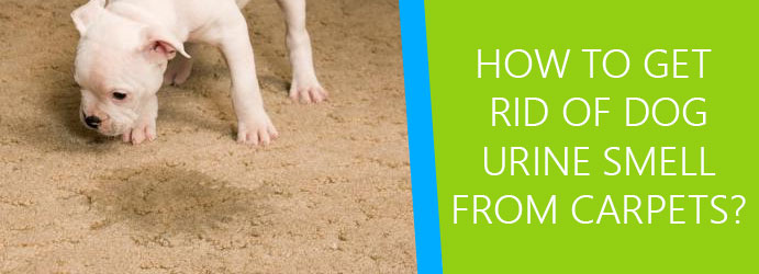 How to get rid of dog urine smell from carpet?