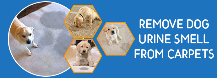 Remove Dog Urine Smell From Carpet Melbourne
