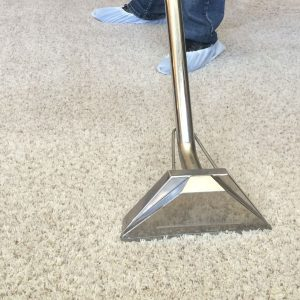 Carpet Sanitization