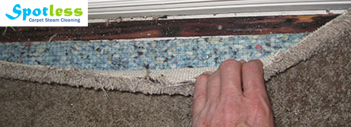 Carpet Mould Removal Hopetoun Gardens
