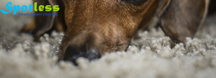 Carpet Pet Damage Repair Services Bowen Mountain