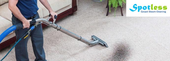 Professional Carpet Treatment