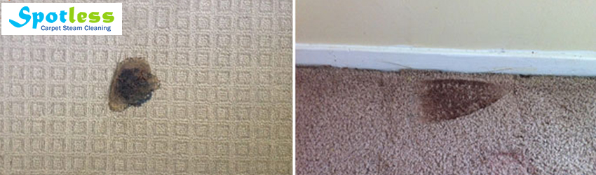 Carpet Burn Repair Mount Edwards