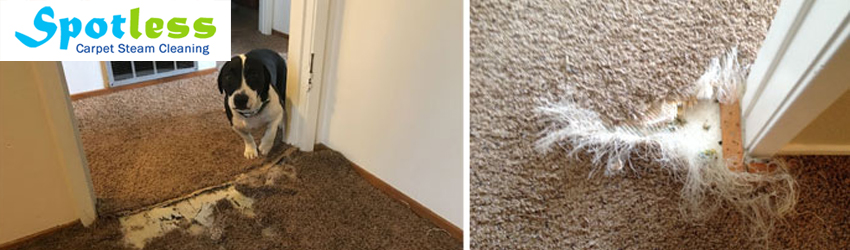 Carpet Pet Damage Repair Bowen Mountain