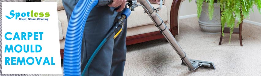 Carpet Mould Removal Larbert