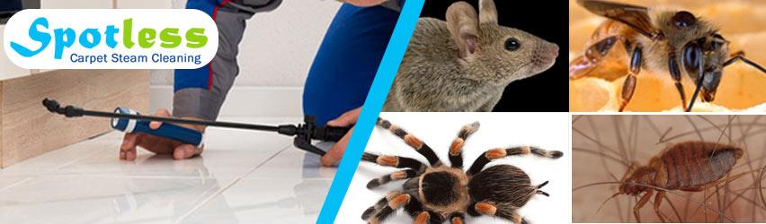 Expert Pest Control Brighton