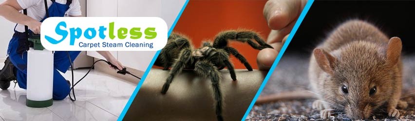 Expert Pest Control Service Adelaide