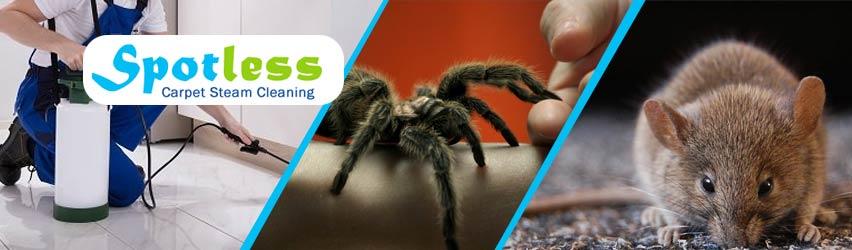 Expert Pest Control Service Brighton