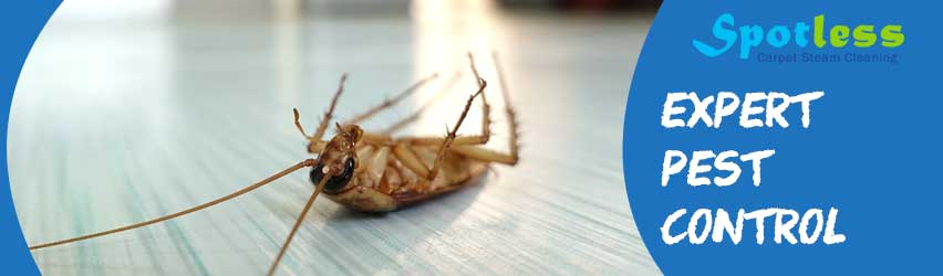 Expert Pest Control Belmore