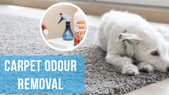 Carpet Odour Removal Services