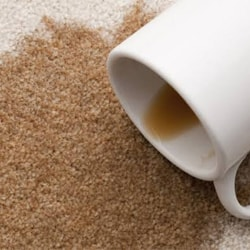 Carpet Coffee Stain Removal Services