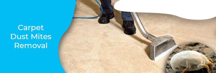 Carpet Dust Mites Removal