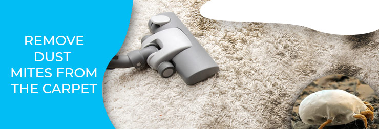 How to Control Dust Mites on The Carpet