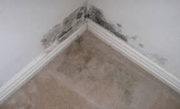 Carpet Mould Removal Hobart