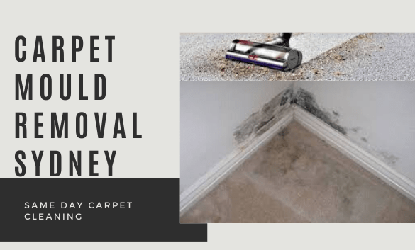 Carpet Mould Removal Services Sydney
